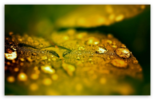 Wet Leaf, Bokeh HD wallpaper for Wide 16:10 5:3 Widescreen WHXGA WQXGA WUXGA WXGA WGA ; HD 16:9 High Definition WQHD QWXGA 1080p 900p 720p QHD nHD ; Standard 4:3 5:4 3:2 Fullscreen UXGA XGA SVGA QSXGA SXGA DVGA HVGA HQVGA devices ( Apple PowerBook G4 iPhone 4 3G 3GS iPod Touch ) ; iPad 1/2/Mini ; Mobile 4:3 5:3 3:2 16:9 5:4 - UXGA XGA SVGA WGA DVGA HVGA HQVGA devices ( Apple PowerBook G4 iPhone 4 3G 3GS iPod Touch ) WQHD QWXGA 1080p 900p 720p QHD nHD QSXGA SXGA ; Dual 16:10 5:3 16:9 4:3 5:4 WHXGA WQXGA WUXGA WXGA WGA WQHD QWXGA 1080p 900p 720p QHD nHD UXGA XGA SVGA QSXGA SXGA ;