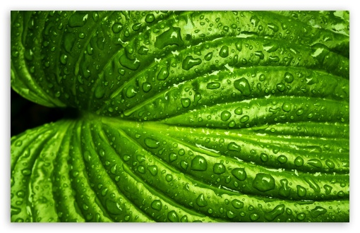 Wet Leaf, Macro ❤ 4K UHD Wallpaper for Wide 16:10 5:3 Widescreen WHXGA WQXGA WUXGA WXGA WGA ; 4K UHD 16:9 Ultra High Definition 2160p 1440p 1080p 900p 720p ; UHD 16:9 2160p 1440p 1080p 900p 720p ; Standard 4:3 5:4 3:2 Fullscreen UXGA XGA SVGA QSXGA SXGA DVGA HVGA HQVGA ( Apple PowerBook G4 iPhone 4 3G 3GS iPod Touch ) ; Smartphone 5:3 WGA ; Tablet 1:1 ; iPad 1/2/Mini ; Mobile 4:3 5:3 3:2 16:9 5:4 - UXGA XGA SVGA WGA DVGA HVGA HQVGA ( Apple PowerBook G4 iPhone 4 3G 3GS iPod Touch ) 2160p 1440p 1080p 900p 720p QSXGA SXGA ; Dual 16:10 5:3 16:9 4:3 5:4 WHXGA WQXGA WUXGA WXGA WGA 2160p 1440p 1080p 900p 720p UXGA XGA SVGA QSXGA SXGA ;