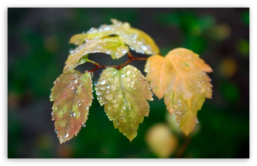 Wet Leaves HD wallpaper for Wide 16:10 5:3 Widescreen WHXGA WQXGA WUXGA WXGA WGA ; HD 16:9 High Definition WQHD QWXGA 1080p 900p 720p QHD nHD ; Standard 4:3 3:2 Fullscreen UXGA XGA SVGA DVGA HVGA HQVGA devices ( Apple PowerBook G4 iPhone 4 3G 3GS iPod Touch ) ; Tablet 1:1 ; iPad 1/2/Mini ; Mobile 4:3 5:3 3:2 16:9 5:4 - UXGA XGA SVGA WGA DVGA HVGA HQVGA devices ( Apple PowerBook G4 iPhone 4 3G 3GS iPod Touch ) WQHD QWXGA 1080p 900p 720p QHD nHD QSXGA SXGA ; Dual 4:3 5:4 UXGA XGA SVGA QSXGA SXGA ;