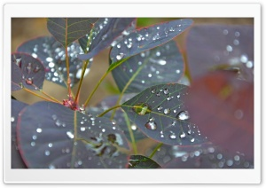 Wet Leaves Close Up HD Wide Wallpaper for Widescreen