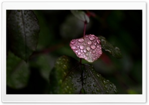 Wet Leaves Macro HD Wide Wallpaper for Widescreen