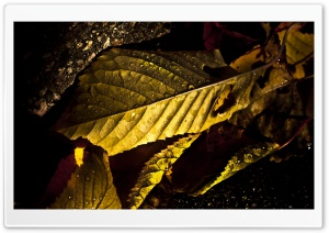 Wet Leaves Macro, Autumn HD Wide Wallpaper for Widescreen