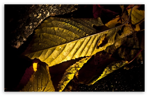 Wet Leaves Macro, Autumn HD wallpaper for Wide 16:10 5:3 Widescreen WHXGA WQXGA WUXGA WXGA WGA ; HD 16:9 High Definition WQHD QWXGA 1080p 900p 720p QHD nHD ; UHD 16:9 WQHD QWXGA 1080p 900p 720p QHD nHD ; Standard 4:3 5:4 3:2 Fullscreen UXGA XGA SVGA QSXGA SXGA DVGA HVGA HQVGA devices ( Apple PowerBook G4 iPhone 4 3G 3GS iPod Touch ) ; Tablet 1:1 ; iPad 1/2/Mini ; Mobile 4:3 5:3 3:2 16:9 5:4 - UXGA XGA SVGA WGA DVGA HVGA HQVGA devices ( Apple PowerBook G4 iPhone 4 3G 3GS iPod Touch ) WQHD QWXGA 1080p 900p 720p QHD nHD QSXGA SXGA ;