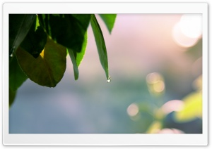 Wet Leaves, Spring HD Wide Wallpaper for Widescreen