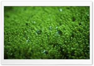 Wet Moss HD Wide Wallpaper for Widescreen