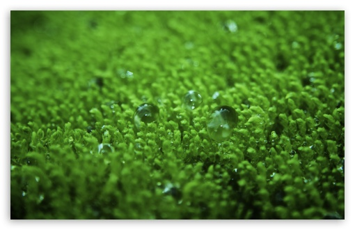 Wet Moss HD wallpaper for Wide 16:10 5:3 Widescreen WHXGA WQXGA WUXGA WXGA WGA ; HD 16:9 High Definition WQHD QWXGA 1080p 900p 720p QHD nHD ; Standard 4:3 5:4 3:2 Fullscreen UXGA XGA SVGA QSXGA SXGA DVGA HVGA HQVGA devices ( Apple PowerBook G4 iPhone 4 3G 3GS iPod Touch ) ; Tablet 1:1 ; iPad 1/2/Mini ; Mobile 4:3 5:3 3:2 16:9 5:4 - UXGA XGA SVGA WGA DVGA HVGA HQVGA devices ( Apple PowerBook G4 iPhone 4 3G 3GS iPod Touch ) WQHD QWXGA 1080p 900p 720p QHD nHD QSXGA SXGA ; Dual 16:10 5:3 16:9 4:3 5:4 WHXGA WQXGA WUXGA WXGA WGA WQHD QWXGA 1080p 900p 720p QHD nHD UXGA XGA SVGA QSXGA SXGA ;