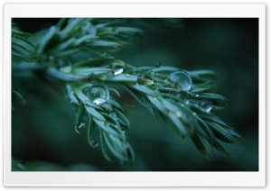 Wet Plant HD Wide Wallpaper for Widescreen