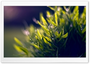 Wet Plant, Bokeh HD Wide Wallpaper for Widescreen