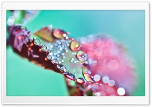 Wet Purple Leaf Bokeh HD Wide Wallpaper for Widescreen