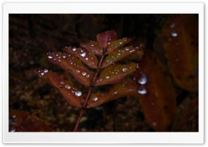 Wet Rust Colored Leaves HD Wide Wallpaper for Widescreen