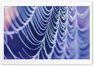 Wet Spider Web HD Wide Wallpaper for Widescreen