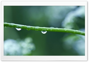 Wet Stem HD Wide Wallpaper for Widescreen