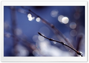 Wet Twig HD Wide Wallpaper for Widescreen