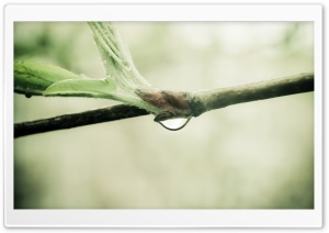 Wet Twig Macro HD Wide Wallpaper for Widescreen