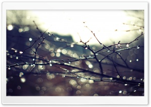 Wet Twigs HD Wide Wallpaper for Widescreen