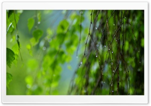 Wet Twigs, Summer HD Wide Wallpaper for Widescreen