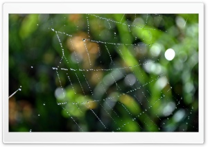 Wet Web HD Wide Wallpaper for Widescreen