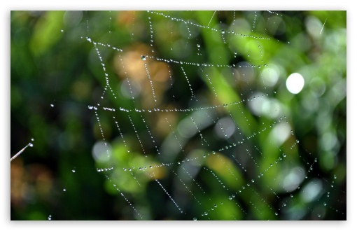Wet Web HD wallpaper for Wide 16:10 5:3 Widescreen WHXGA WQXGA WUXGA WXGA WGA ; HD 16:9 High Definition WQHD QWXGA 1080p 900p 720p QHD nHD ; Standard 4:3 5:4 3:2 Fullscreen UXGA XGA SVGA QSXGA SXGA DVGA HVGA HQVGA devices ( Apple PowerBook G4 iPhone 4 3G 3GS iPod Touch ) ; Tablet 1:1 ; iPad 1/2/Mini ; Mobile 4:3 5:3 3:2 16:9 5:4 - UXGA XGA SVGA WGA DVGA HVGA HQVGA devices ( Apple PowerBook G4 iPhone 4 3G 3GS iPod Touch ) WQHD QWXGA 1080p 900p 720p QHD nHD QSXGA SXGA ;
