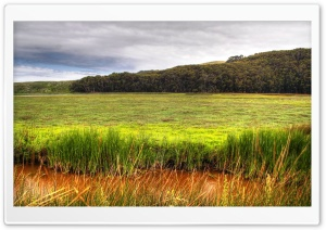 Wetland HD Wide Wallpaper for Widescreen
