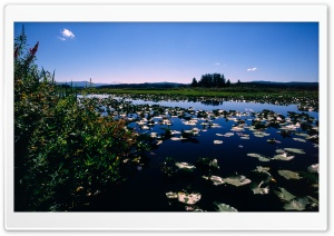 Wetlands HD Wide Wallpaper for 4K UHD Widescreen desktop & smartphone