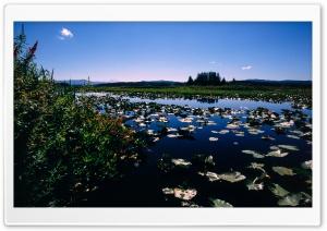 Wetlands Ultra HD Wallpaper for 4K UHD Widescreen desktop, tablet & smartphone