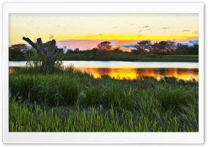 Wetlands Hallucination Ultra HD Wallpaper for 4K UHD Widescreen desktop, tablet & smartphone