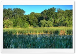 Wetlands in the Minnesota Valley National Wildlife Refuge HD Wide Wallpaper for 4K UHD Widescreen desktop & smartphone