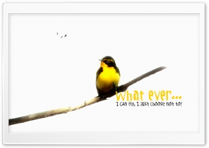 What Ever! HD Wide Wallpaper for Widescreen