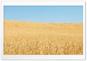 Wheat Field And Sky HD Wide Wallpaper for Widescreen