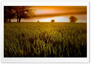 Wheat Field At Sunset HD Wide Wallpaper for Widescreen