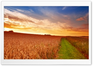 Wheat Field Path HD Wide Wallpaper for Widescreen