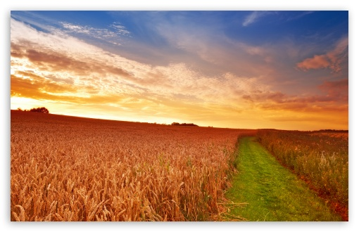 Wheat Field Path ❤ 4K UHD Wallpaper for Wide 16:10 5:3 Widescreen WHXGA WQXGA WUXGA WXGA WGA ; 4K UHD 16:9 Ultra High Definition 2160p 1440p 1080p 900p 720p ; Standard 4:3 5:4 3:2 Fullscreen UXGA XGA SVGA QSXGA SXGA DVGA HVGA HQVGA ( Apple PowerBook G4 iPhone 4 3G 3GS iPod Touch ) ; Tablet 1:1 ; iPad 1/2/Mini ; Mobile 4:3 5:3 3:2 16:9 5:4 - UXGA XGA SVGA WGA DVGA HVGA HQVGA ( Apple PowerBook G4 iPhone 4 3G 3GS iPod Touch ) 2160p 1440p 1080p 900p 720p QSXGA SXGA ; Dual 4:3 5:4 UXGA XGA SVGA QSXGA SXGA ;