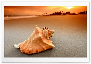 Whelk Shell HD Wide Wallpaper for 4K UHD Widescreen desktop & smartphone
