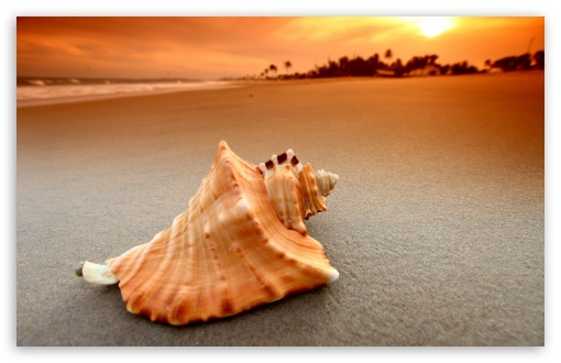 Whelk Shell HD wallpaper for Wide 16:10 5:3 Widescreen WHXGA WQXGA WUXGA WXGA WGA ; HD 16:9 High Definition WQHD QWXGA 1080p 900p 720p QHD nHD ; Standard 4:3 5:4 3:2 Fullscreen UXGA XGA SVGA QSXGA SXGA DVGA HVGA HQVGA devices ( Apple PowerBook G4 iPhone 4 3G 3GS iPod Touch ) ; Tablet 1:1 ; iPad 1/2/Mini ; Mobile 4:3 5:3 3:2 16:9 5:4 - UXGA XGA SVGA WGA DVGA HVGA HQVGA devices ( Apple PowerBook G4 iPhone 4 3G 3GS iPod Touch ) WQHD QWXGA 1080p 900p 720p QHD nHD QSXGA SXGA ; Dual 4:3 5:4 UXGA XGA SVGA QSXGA SXGA ;