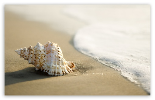 Whelk Shell HD wallpaper for Standard 4:3 5:4 Fullscreen UXGA XGA SVGA QSXGA SXGA ; Wide 16:10 5:3 Widescreen WHXGA WQXGA WUXGA WXGA WGA ; HD 16:9 High Definition WQHD QWXGA 1080p 900p 720p QHD nHD ; Other 3:2 DVGA HVGA HQVGA devices ( Apple PowerBook G4 iPhone 4 3G 3GS iPod Touch ) ; Mobile VGA WVGA iPhone iPad PSP Phone - VGA QVGA Smartphone ( PocketPC GPS iPod Zune BlackBerry HTC Samsung LG Nokia Eten Asus ) WVGA WQVGA Smartphone ( HTC Samsung Sony Ericsson LG Vertu MIO ) HVGA Smartphone ( Apple iPhone iPod BlackBerry HTC Samsung Nokia ) Sony PSP Zune HD Zen ; Tablet 2 ;