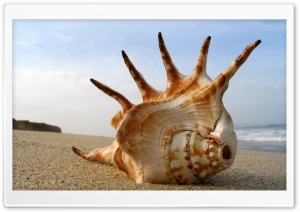 Whelk Shell On The Beach HD Wide Wallpaper for 4K UHD Widescreen desktop & smartphone