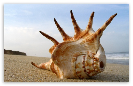Whelk Shell On The Beach HD wallpaper for Wide 16:10 5:3 Widescreen WHXGA WQXGA WUXGA WXGA WGA ; HD 16:9 High Definition WQHD QWXGA 1080p 900p 720p QHD nHD ; Standard 4:3 5:4 3:2 Fullscreen UXGA XGA SVGA QSXGA SXGA DVGA HVGA HQVGA devices ( Apple PowerBook G4 iPhone 4 3G 3GS iPod Touch ) ; iPad 1/2/Mini ; Mobile 4:3 5:3 3:2 16:9 5:4 - UXGA XGA SVGA WGA DVGA HVGA HQVGA devices ( Apple PowerBook G4 iPhone 4 3G 3GS iPod Touch ) WQHD QWXGA 1080p 900p 720p QHD nHD QSXGA SXGA ;