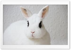 White Bunny, Black Eyes Ultra HD Wallpaper for 4K UHD Widescreen desktop, tablet & smartphone