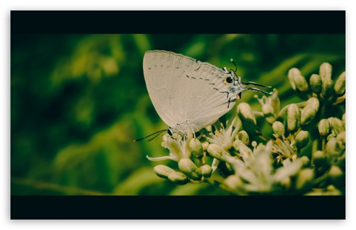 White Butterfly ❤ 4K UHD Wallpaper for Wide 16:10 5:3 Widescreen WHXGA WQXGA WUXGA WXGA WGA ; 4K UHD 16:9 Ultra High Definition 2160p 1440p 1080p 900p 720p ; Standard 4:3 5:4 3:2 Fullscreen UXGA XGA SVGA QSXGA SXGA DVGA HVGA HQVGA ( Apple PowerBook G4 iPhone 4 3G 3GS iPod Touch ) ; Tablet 1:1 ; iPad 1/2/Mini ; Mobile 4:3 5:3 3:2 16:9 5:4 - UXGA XGA SVGA WGA DVGA HVGA HQVGA ( Apple PowerBook G4 iPhone 4 3G 3GS iPod Touch ) 2160p 1440p 1080p 900p 720p QSXGA SXGA ;
