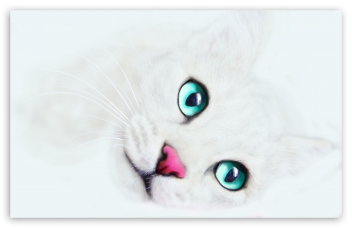 White Cat Background HD wallpaper for Wide 16:10 5:3 Widescreen WHXGA WQXGA WUXGA WXGA WGA ; HD 16:9 High Definition WQHD QWXGA 1080p 900p 720p QHD nHD ; Standard 4:3 5:4 3:2 Fullscreen UXGA XGA SVGA QSXGA SXGA DVGA HVGA HQVGA devices ( Apple PowerBook G4 iPhone 4 3G 3GS iPod Touch ) ; iPad 1/2/Mini ; Mobile 4:3 5:3 3:2 16:9 5:4 - UXGA XGA SVGA WGA DVGA HVGA HQVGA devices ( Apple PowerBook G4 iPhone 4 3G 3GS iPod Touch ) WQHD QWXGA 1080p 900p 720p QHD nHD QSXGA SXGA ;