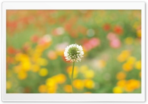 White Clover HD Wide Wallpaper for Widescreen