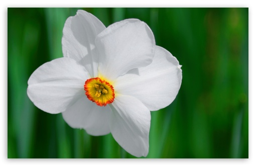 White Daffodil HD wallpaper for Wide 16:10 5:3 Widescreen WHXGA WQXGA WUXGA WXGA WGA ; HD 16:9 High Definition WQHD QWXGA 1080p 900p 720p QHD nHD ; UHD 16:9 WQHD QWXGA 1080p 900p 720p QHD nHD ; Standard 4:3 5:4 3:2 Fullscreen UXGA XGA SVGA QSXGA SXGA DVGA HVGA HQVGA devices ( Apple PowerBook G4 iPhone 4 3G 3GS iPod Touch ) ; Smartphone 5:3 WGA ; Tablet 1:1 ; iPad 1/2/Mini ; Mobile 4:3 5:3 3:2 16:9 5:4 - UXGA XGA SVGA WGA DVGA HVGA HQVGA devices ( Apple PowerBook G4 iPhone 4 3G 3GS iPod Touch ) WQHD QWXGA 1080p 900p 720p QHD nHD QSXGA SXGA ; Dual 16:10 5:3 16:9 4:3 5:4 WHXGA WQXGA WUXGA WXGA WGA WQHD QWXGA 1080p 900p 720p QHD nHD UXGA XGA SVGA QSXGA SXGA ;