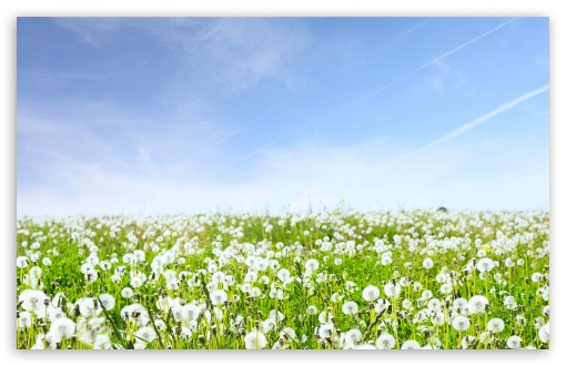 White Dandelions Field HD wallpaper for Wide 16:10 5:3 Widescreen WHXGA WQXGA WUXGA WXGA WGA ; HD 16:9 High Definition WQHD QWXGA 1080p 900p 720p QHD nHD ; Standard 4:3 5:4 3:2 Fullscreen UXGA XGA SVGA QSXGA SXGA DVGA HVGA HQVGA devices ( Apple PowerBook G4 iPhone 4 3G 3GS iPod Touch ) ; Tablet 1:1 ; iPad 1/2/Mini ; Mobile 4:3 5:3 3:2 16:9 5:4 - UXGA XGA SVGA WGA DVGA HVGA HQVGA devices ( Apple PowerBook G4 iPhone 4 3G 3GS iPod Touch ) WQHD QWXGA 1080p 900p 720p QHD nHD QSXGA SXGA ; Dual 16:10 5:3 4:3 5:4 WHXGA WQXGA WUXGA WXGA WGA UXGA XGA SVGA QSXGA SXGA ;