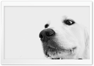 White Dog, Winter HD Wide Wallpaper for Widescreen