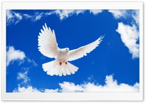 White Dove HD Wide Wallpaper for 4K UHD Widescreen desktop & smartphone