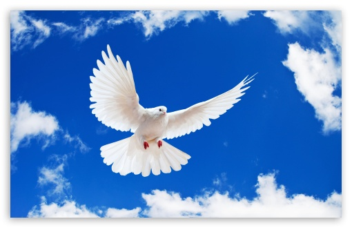 White Dove HD wallpaper for Wide 16:10 5:3 Widescreen WHXGA WQXGA WUXGA WXGA WGA ; HD 16:9 High Definition WQHD QWXGA 1080p 900p 720p QHD nHD ; Standard 4:3 5:4 3:2 Fullscreen UXGA XGA SVGA QSXGA SXGA DVGA HVGA HQVGA devices ( Apple PowerBook G4 iPhone 4 3G 3GS iPod Touch ) ; Tablet 1:1 ; iPad 1/2/Mini ; Mobile 4:3 5:3 3:2 16:9 5:4 - UXGA XGA SVGA WGA DVGA HVGA HQVGA devices ( Apple PowerBook G4 iPhone 4 3G 3GS iPod Touch ) WQHD QWXGA 1080p 900p 720p QHD nHD QSXGA SXGA ; Dual 5:4 QSXGA SXGA ;