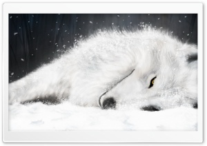 White Fantasy Wolf HD Wide Wallpaper for Widescreen