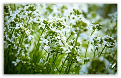 White Field Flowers HD wallpaper for Wide 16:10 5:3 Widescreen WHXGA WQXGA WUXGA WXGA WGA ; HD 16:9 High Definition WQHD QWXGA 1080p 900p 720p QHD nHD ; Standard 4:3 5:4 3:2 Fullscreen UXGA XGA SVGA QSXGA SXGA DVGA HVGA HQVGA devices ( Apple PowerBook G4 iPhone 4 3G 3GS iPod Touch ) ; Tablet 1:1 ; iPad 1/2/Mini ; Mobile 4:3 5:3 3:2 16:9 5:4 - UXGA XGA SVGA WGA DVGA HVGA HQVGA devices ( Apple PowerBook G4 iPhone 4 3G 3GS iPod Touch ) WQHD QWXGA 1080p 900p 720p QHD nHD QSXGA SXGA ; Dual 16:10 5:3 16:9 4:3 5:4 WHXGA WQXGA WUXGA WXGA WGA WQHD QWXGA 1080p 900p 720p QHD nHD UXGA XGA SVGA QSXGA SXGA ;