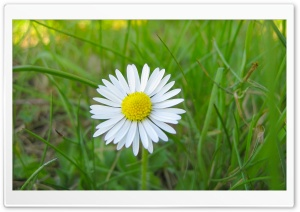 White Flower and Green Grass HD Wide Wallpaper for 4K UHD Widescreen desktop & smartphone