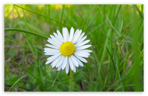 White Flower and Green Grass HD wallpaper for Wide 16:10 5:3 Widescreen WHXGA WQXGA WUXGA WXGA WGA ; HD 16:9 High Definition WQHD QWXGA 1080p 900p 720p QHD nHD ; Standard 4:3 5:4 3:2 Fullscreen UXGA XGA SVGA QSXGA SXGA DVGA HVGA HQVGA devices ( Apple PowerBook G4 iPhone 4 3G 3GS iPod Touch ) ; Tablet 1:1 ; iPad 1/2/Mini ; Mobile 4:3 5:3 3:2 16:9 5:4 - UXGA XGA SVGA WGA DVGA HVGA HQVGA devices ( Apple PowerBook G4 iPhone 4 3G 3GS iPod Touch ) WQHD QWXGA 1080p 900p 720p QHD nHD QSXGA SXGA ; Dual 16:10 5:3 4:3 5:4 WHXGA WQXGA WUXGA WXGA WGA UXGA XGA SVGA QSXGA SXGA ;